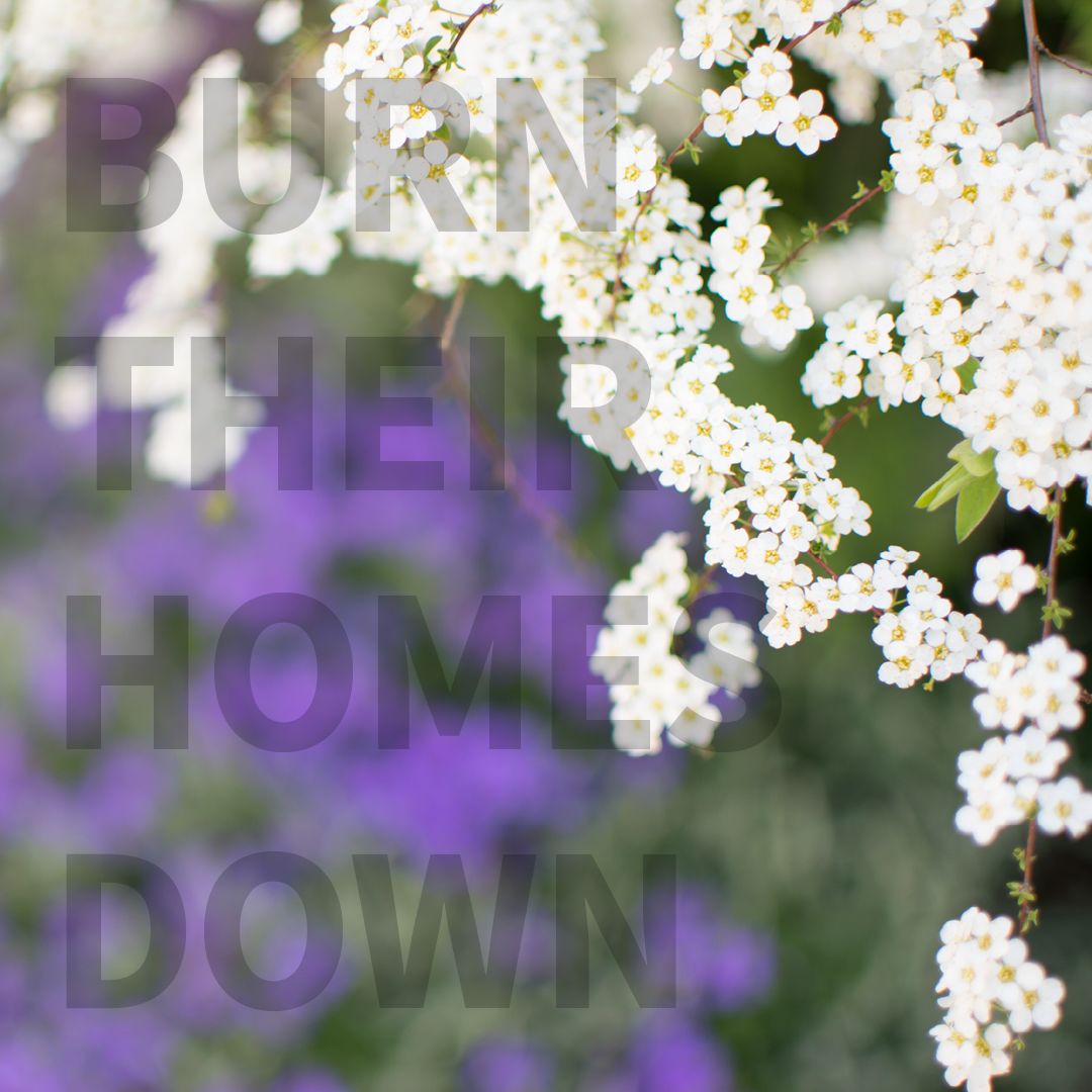 Blumenfoto mit Quote Burn their homes down