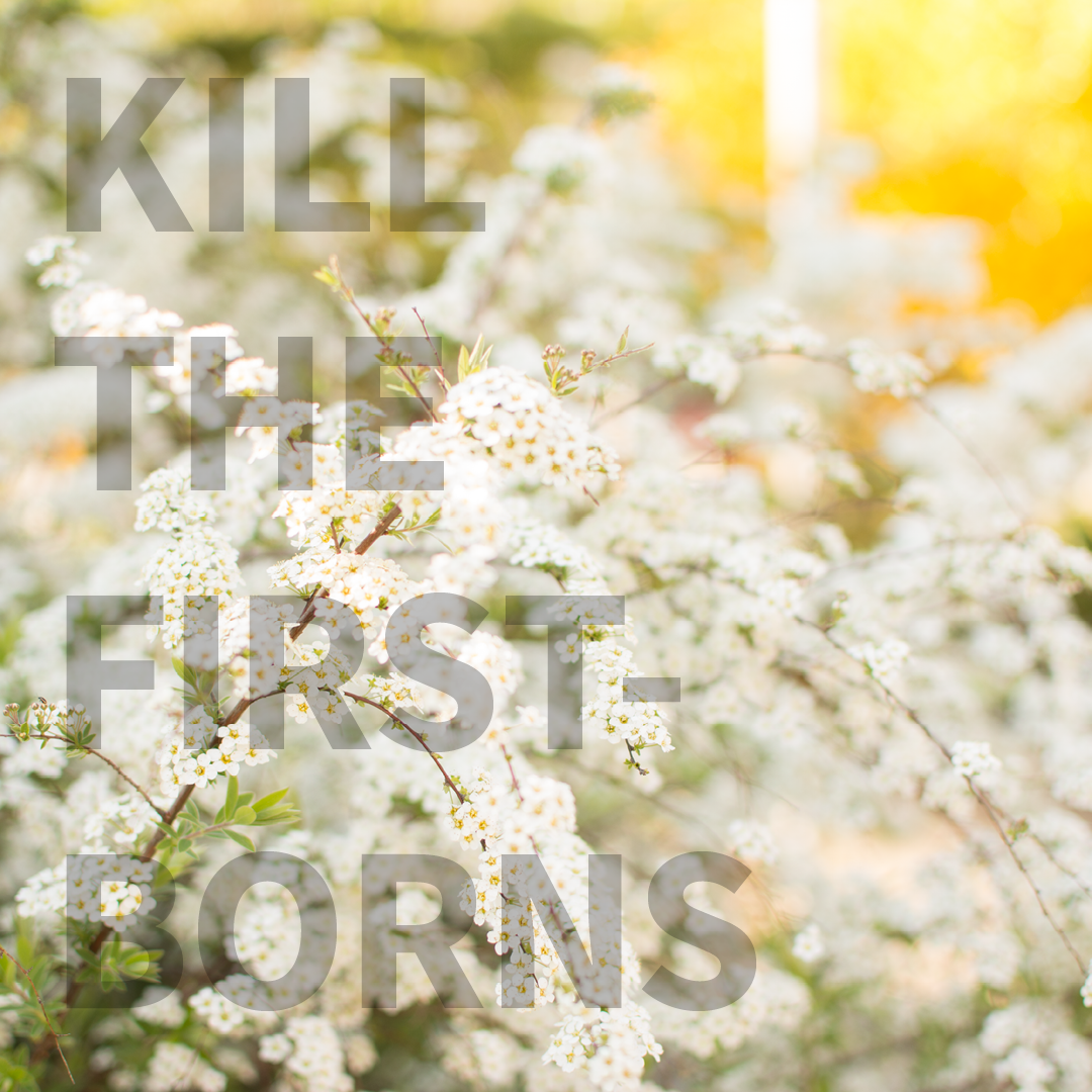 Blumenfoto mit Quote Kill the first-borns